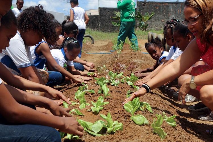 9ª Horta escolar é um projeto que une sustentabilidade e conscientização alimentar para crianças - Foto: Divulgação| Bruno Concha