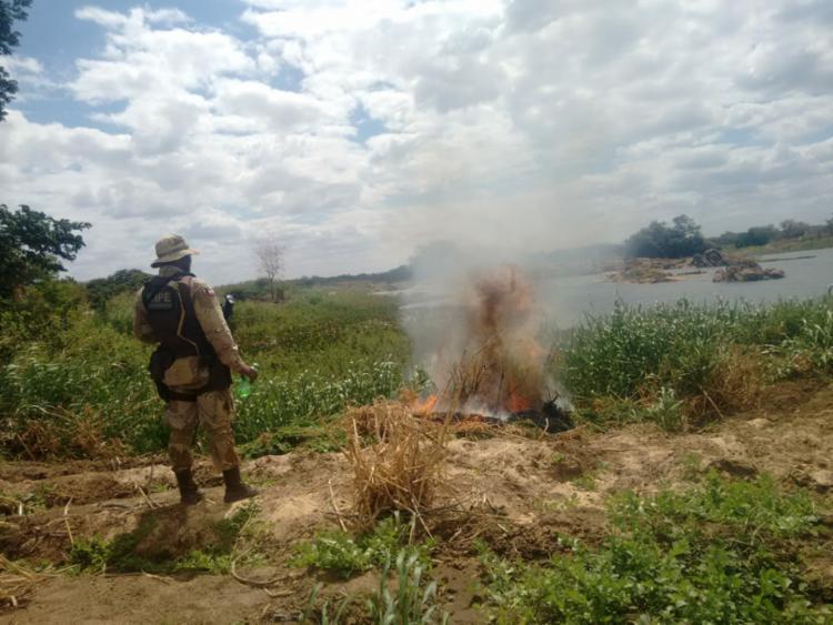 Durante a operação, foram incinerados 25 mil pés de maconha - Foto: Divulgação | SSP-BA