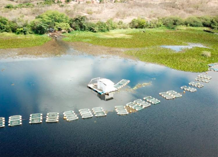 Operação aconteceu em nove dos municípios banhados pelo maior rio da Bahia - Foto: Divulgação | MP-BA