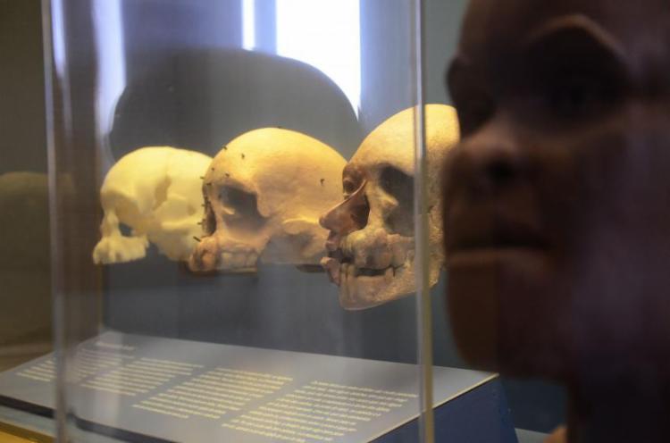 Luzia é o fóssil humano mais antigo já encontrado nas Américas, com cerca de 12 mil anos - Foto: Alexandre Macieira | Riotur | Fotos Públicas