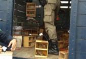 Operação da PRF resgata 529 animais silvestre de comercio ilegal em Feira | Foto: Divulgação | PRF