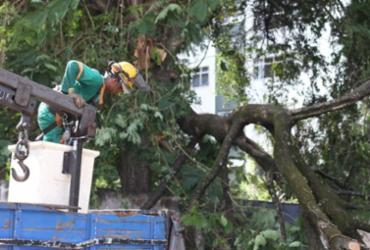 Galho de árvore cai e obstrui pista em Ondina | Raul Spinassé | Ag. A TARDE