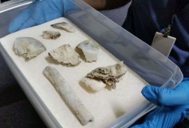 Fragmentos do crânio de Luzia são achados no Museu Nacional | Léo Rodrigues | Agência Brasil