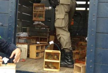 Operação da PRF resgata 529 animais silvestre de comercio ilegal em Feira | Divulgação | PRF