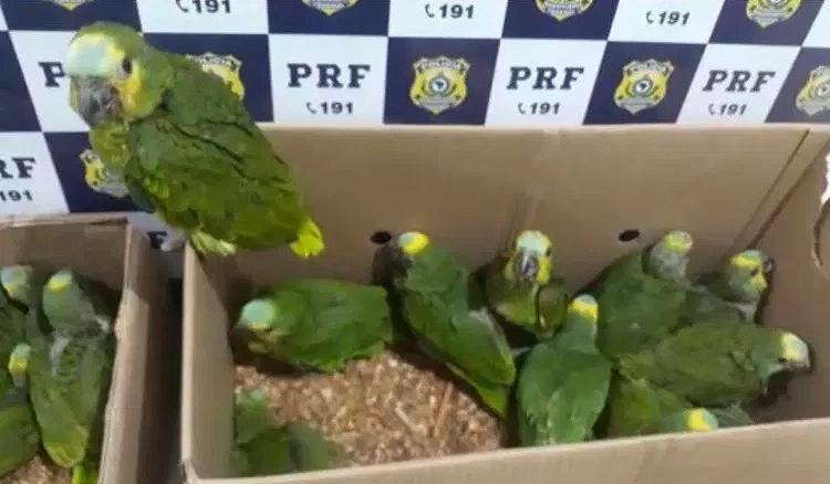 As aves foram capturadas em Muquém do São Francisco e seriam vendidas na Feira do Rolo, em Salvador - Foto: Divulgação l PRF