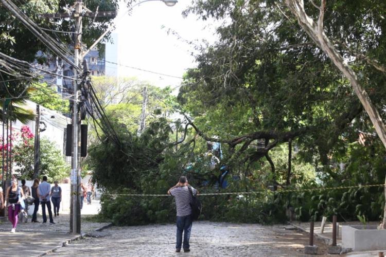 Galho impede a passagem de veículos na rua Macapá