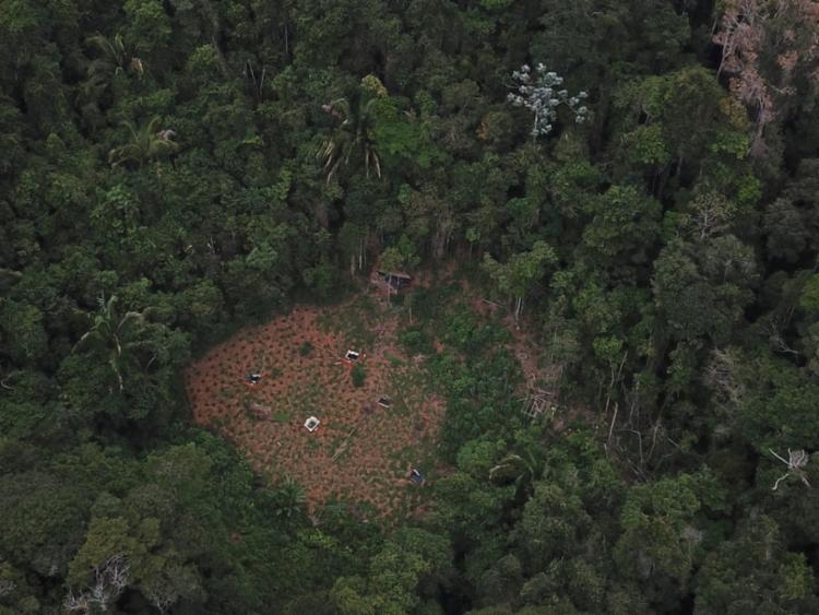 Imagens de drone auxiliaram a localização das plantações
