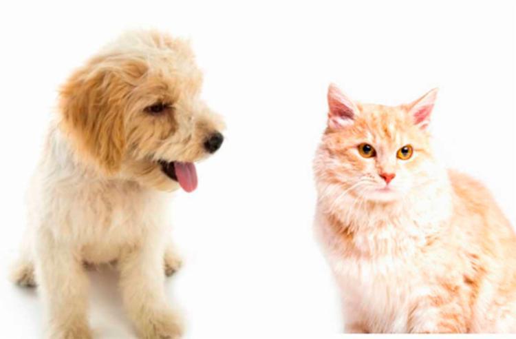 Tipo de câncer acomete a todos os animais mamíferos, mas é mais frequente em cadelas e gatas - Foto: Freepik