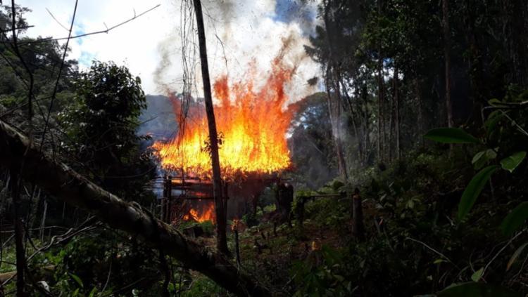 Droga foi queimada nesta quarta-feira, 3, quando plantação foi descoberta pela polícia - Foto: Divulgação   SSP-BA