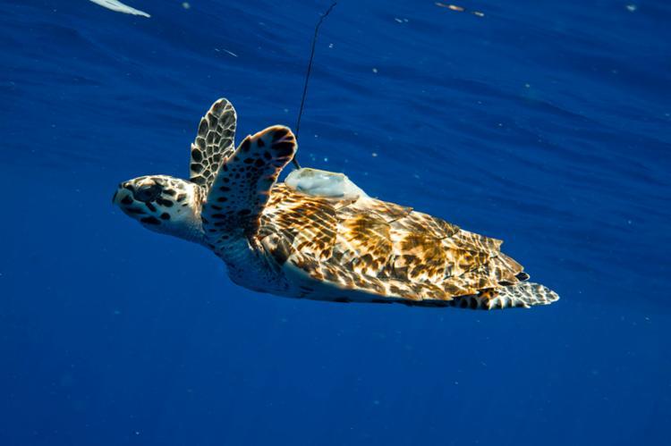 Tartarugas marinhas começam a se reproduzir em outubro