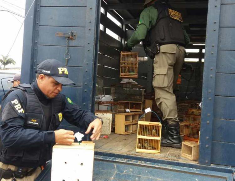 Os bichos foram encaminhados à Unidade Operacional da PRF, onde serão tomadas as devidas medidas - Foto: Divulgação | PRF