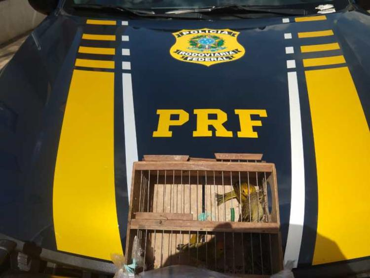 Os suspeitos das duas situações irão responder na Justiça por crimes ambientais - Foto: Divulgação   PRF-BA