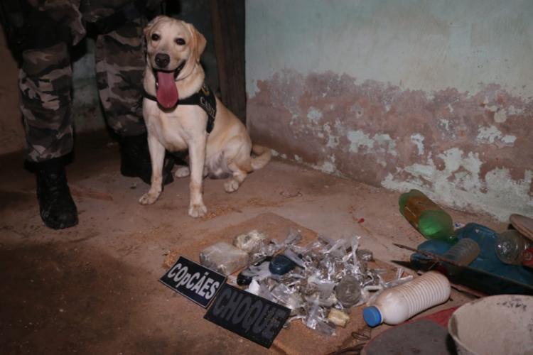 Cães localizaram crack e maconha em uma casa e um terreno onde as drogas eram vendidas - Foto: Alberto Maraux | SSP-BA