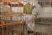 Pássaros silvestres são resgatados após prisão de suspeitos em Salvador | Foto: Divulgação | SSP-BA