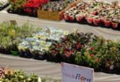 Feira reúne flores exóticas em centro de compras | Foto: Felippe Tomaz
