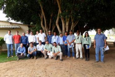Produtores são orientados sobre a prevenção do bicudo para a próxima safra de algodão