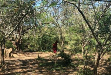 Suspeitos são localizados em matagal na RMS com entorpecentes   Divulgação   SSP-BA