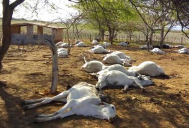 Mais de 120 cabeças de gado morrem em fazenda na Bahia | Reprodução | Informe Tanhaçu
