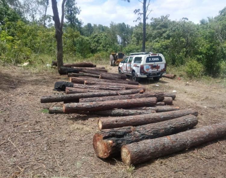 Policiais chegaram ao local de desmatamento após denúncia anônima - Foto: Divulgação   SSP-BA