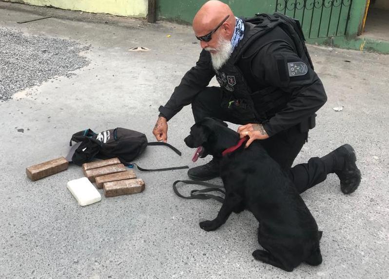 Laika, da raça Labrador, foi um dos cães usados na ação em Camaçari