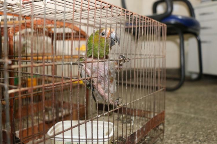 Os animais foram encaminhados a Companhia de Polícia de Proteção Ambiental (Coppa) e libertados no Parque de Pituaçu - Foto: Divulgação | SSP-BA