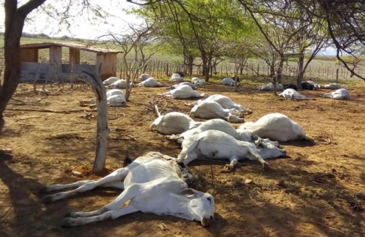 Especialista acredita que as mortes possam ter sido causadas por infecção alimentar - Foto: Reprodução | Informe Tanhaçu
