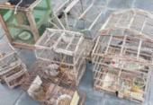 Aves silvestres são resgatadas e armadilhas apreendidas em Cipó | Foto: Divulgação | PRF-BA