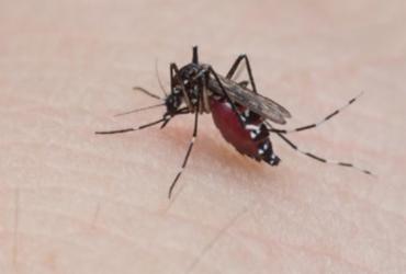 Municípios baianos se encontram em situação de risco para dengue, zika e chikungunya