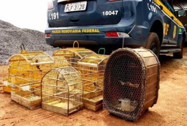 Homem é flagrado com animais silvestres em Ribeira do Pombal   Reprodução   PRF