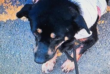Ambulante é detido por esfaquear cachorro na Estação Lapa | Reprodução