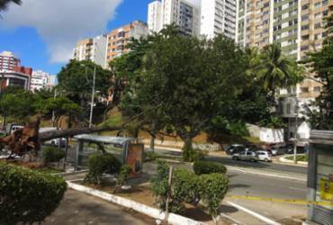 Árvore cai e atinge ponto de ônibus na avenida Centenário | Cidadão Repórter | Via WhatsApp