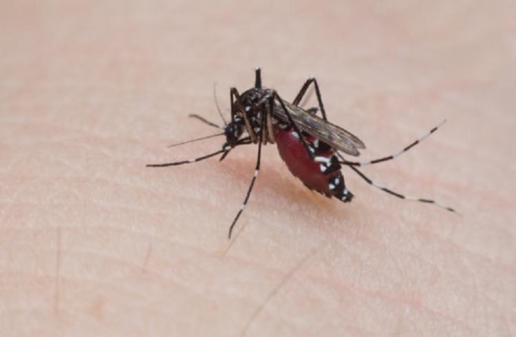 No total de 255 municípios baianos,186 estão em estado de alerta e 69 em risco de surto das doenças - Foto: Divulgação