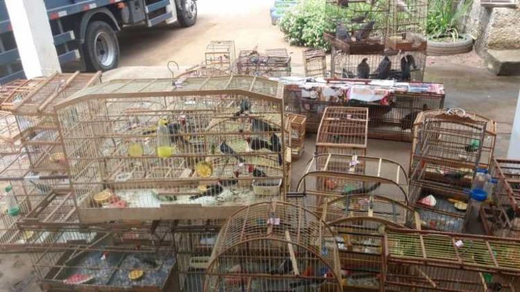 Os animais que estavam em boas condições de saúde foram devolvidos a natureza - Foto: Divulgação | PRF