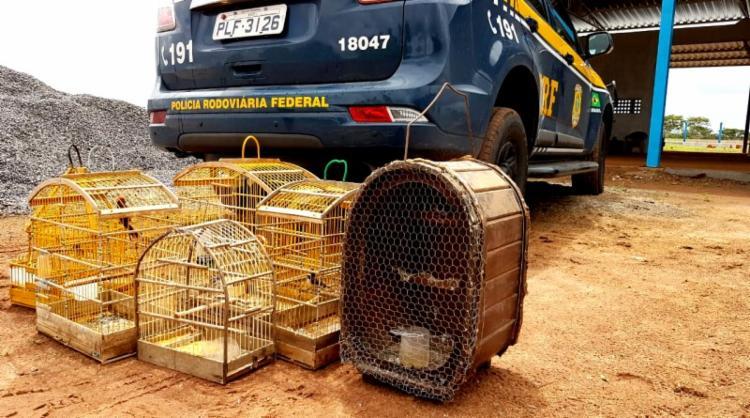 O Cardeal, Tico-tico, Baiano, Bigodinho, Golinho e Tico-Tico-Rei Vermelho foram encaminhados para a Secretaria de Meio Ambiental de Ribeira do Pombal - Foto: Reprodução | PRF