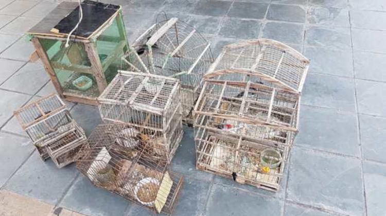 Proprietária mantinha as aves em cativeiro, sem autorização do órgão ambiental - Foto: Divulgação | PRF-BA