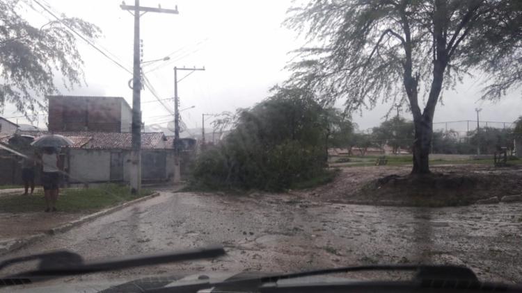Diversas arvores caíram pela cidade por conta dos ventos fortes