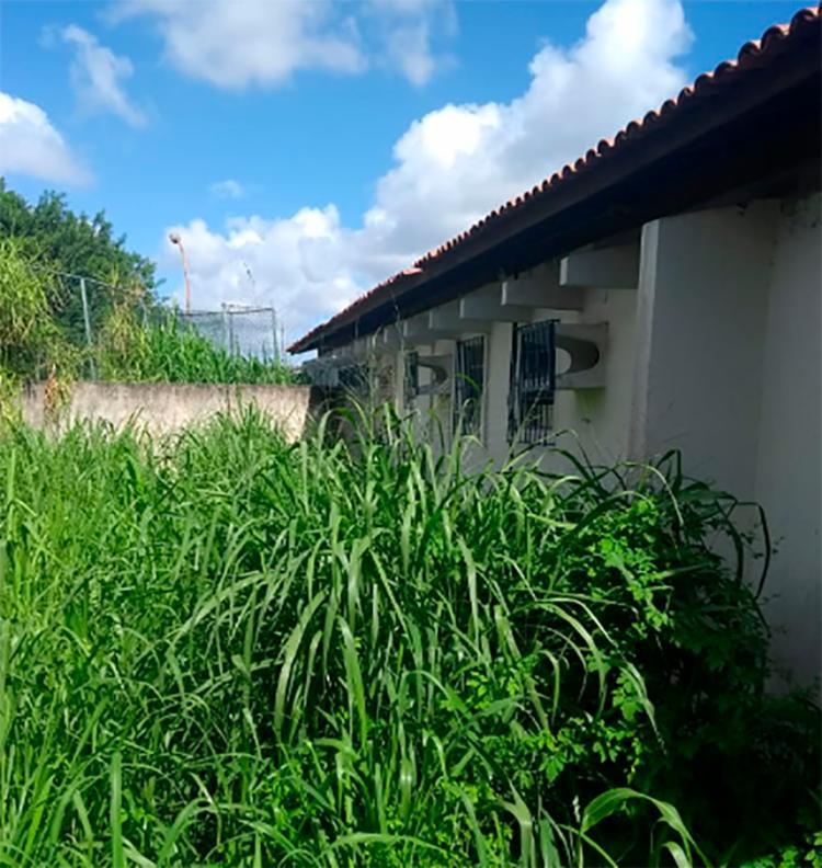 Um grande matagal se formou na sede do Conselho tutelar em Valéria
