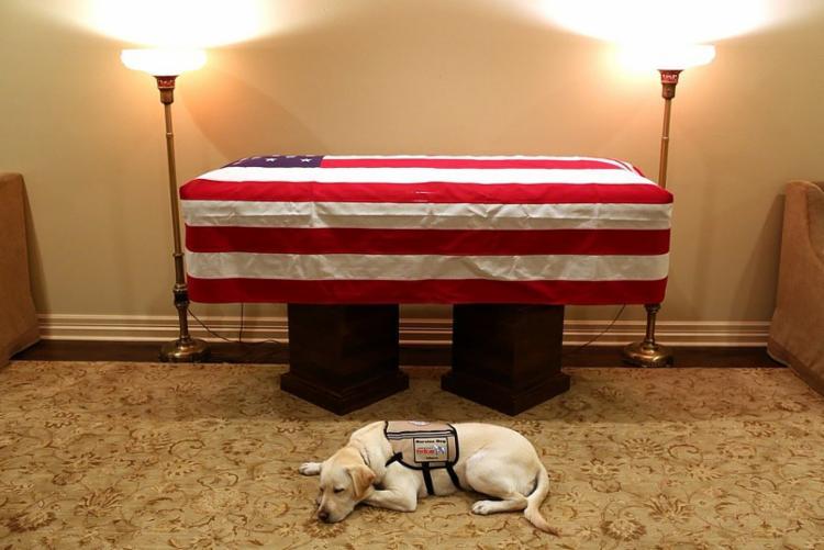 O cão Sully, um labrador, foi dado a Bush para abrir portas, pegar itens e conseguir ajuda para ele - Foto: Reprodução | Twitter