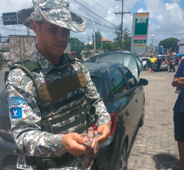 O animal não é o primeiro capturado em uma concessionária - Foto: Divulgação | Guarda Municipal