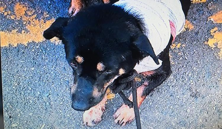 Cachorro foi encaminhado para uma clínica veterinária - Foto: Reprodução