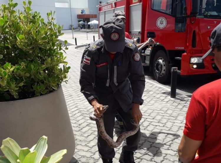 O animal foi encontrado no vaso de uma planta por populares que frequentavam o centro de compras - Foto: Divulgação
