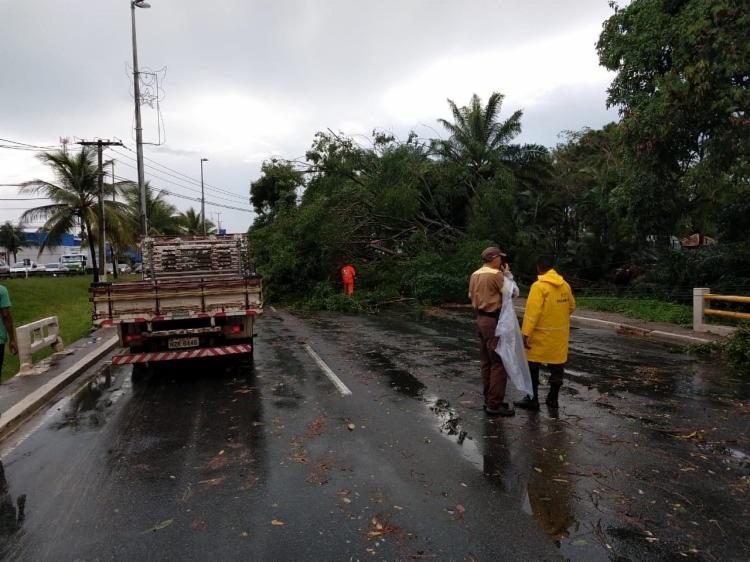 Uma árvore caiu no trecho da BA-099 (sentido Salvador) e deixou o trânsito lento - Foto: Adilton Venegeroles l Ag. A TARDE