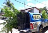 Jovem é preso com plantação de maconha dentro de sítio na BA-001 | Foto: Divulgação | Verdinho Notícias