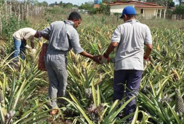 Ações nos setores da Agricultura e Pecuária foram ampliadas em Castro Alves
