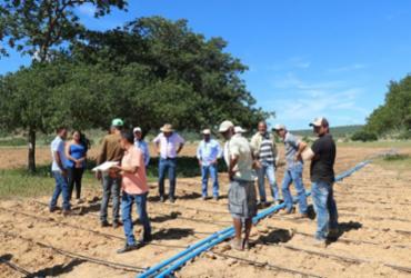 Pequenos produtores de algodão do Sudoeste da Bahia recebem novos kits de irrigação