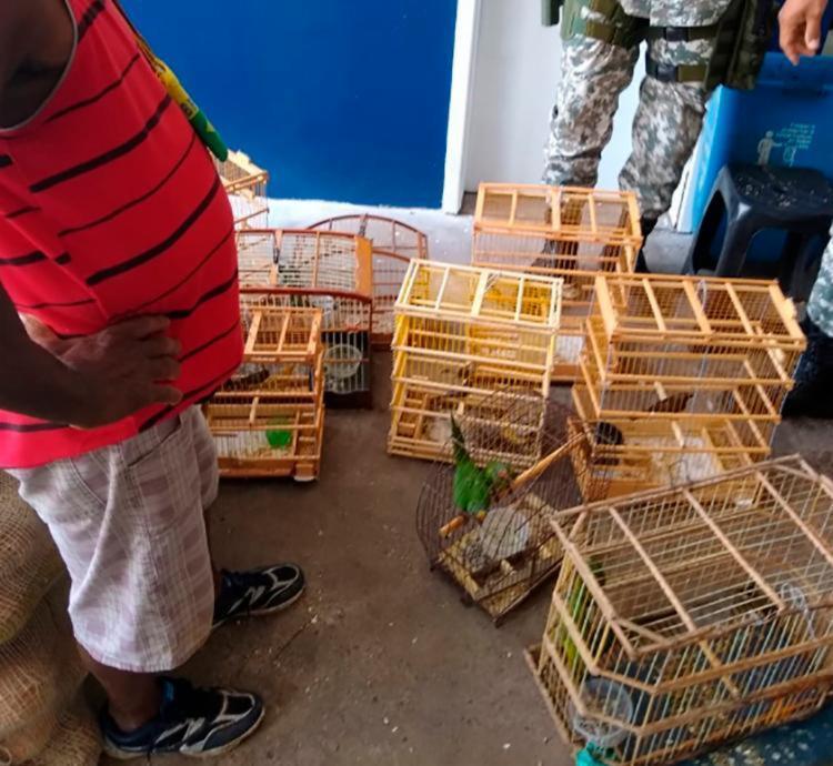 Animais estavam em posse de um permissionário do Mercado Municipal - Foto: Divulgação | Guarda Municipal