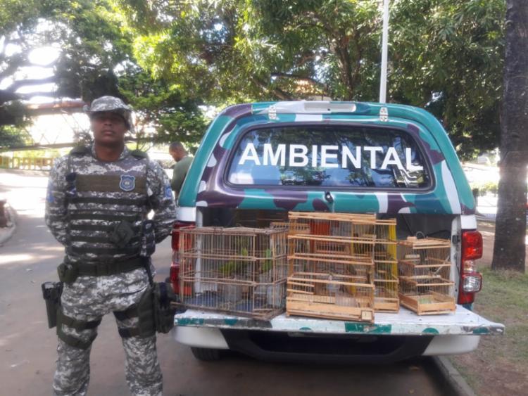 Aves foram apreendidas e encaminhadas para o Centro de Triagem de Animais Silvestres do Ibama