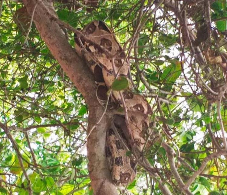 Cobra estava em uma árvore do condomínio