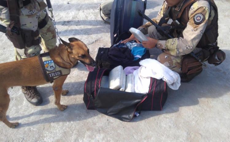 A cadela Íris da Cipe Cacaueira localizou sacolas com 25 kg de maconha