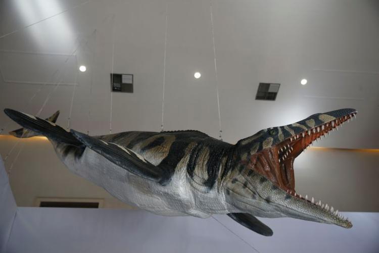 Na exposição será possível observar uma réplica dos ossos de um réptil marinho - Foto: Fernando Frazão | Agência Brasil